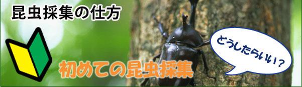 昆虫採取の仕方 初めての昆虫採取
